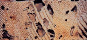 Pest Control South Yarra