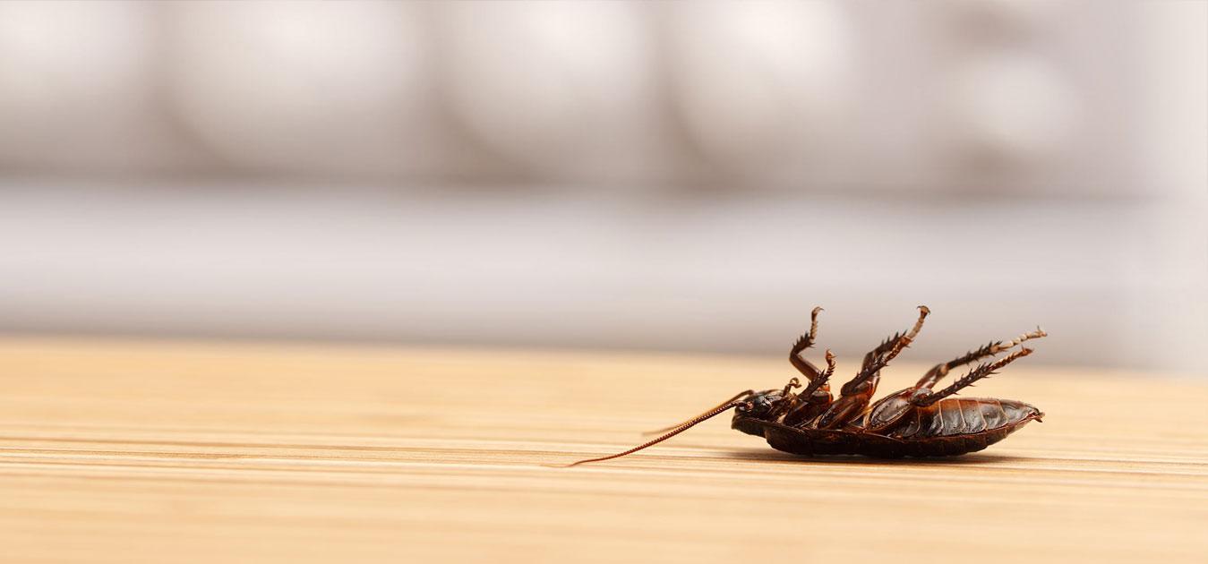 Pest Exterminator Melbourne